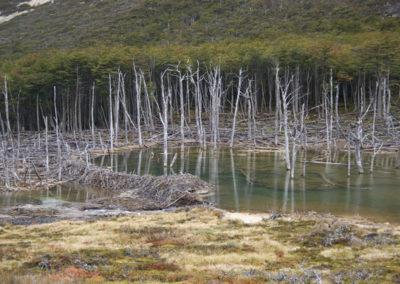 Hráz v Patagonii